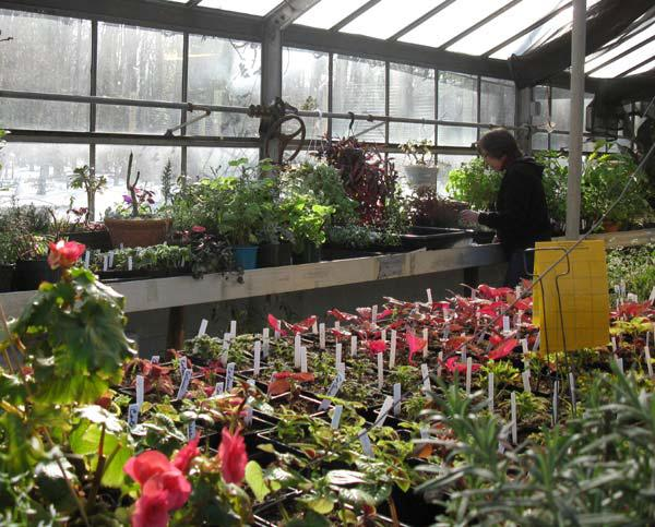 Greenhouse | Rutgers Master Gardeners of Es on green lavender, green beets, green bonsai, green bushes, green perennial, green garden design, green flowers, green tulips, green nature, green gardening, green shrubs, green butternut squash,