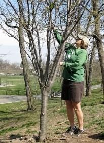 Suzi Butler pruning (2)